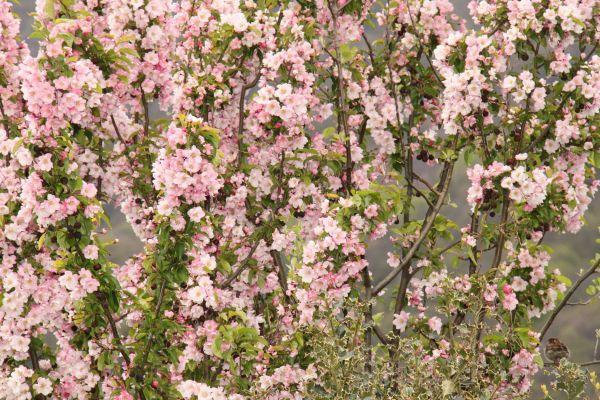 3._Le_jardin